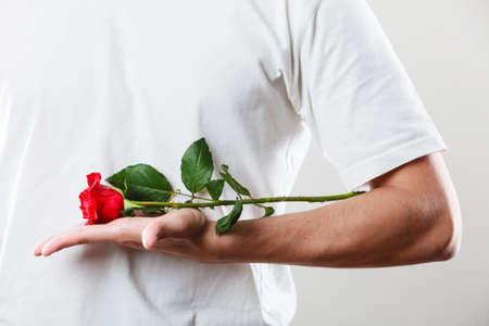 intrigued: Anniversary proposal and engagement idea. Part body man with one red rose wearing white t-shirt. Love concept.