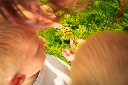 educacion ambiental: Los niños que juegan en el prado verde examinando las flores de campo que consideraban mariquita en las plantas. la educación sobre el medio ambiente.