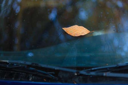 wet leaf: Fall autumn symbol. Single autumnal wet leaf on car windshield