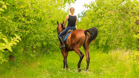 woman horse: Active woman girl jockey training riding horse. Equitation sport competition and activity. Stock Photo