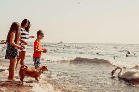 Niña y muchacho de los niños los niños y los padres madre que se divierten en la playa con el cisne en el mar. días de fiesta de vacaciones de verano se relajan. Foto de archivo