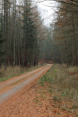 hazy: Fall landscape. Country road in the autumn forest. Misty hazy autumnal day.