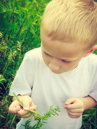 environmental education: Chico Ni�o examinar y recogiendo flores en la pradera. La educaci�n de la conciencia ambiental. La naturaleza verde de verano.