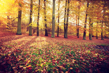 woodland scenery: Autumnal trees inside forest. Woodland fall scenery. Nature vegetation season concept.