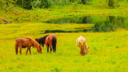 Horse in meadow field. Tranquil countryside scene.