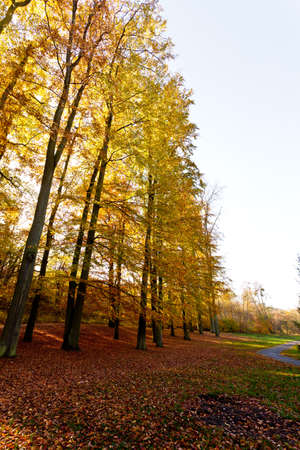 Trees at edge of woodland. Autumnal forest enviroment. Nature vegetation season concept. Stock Photo