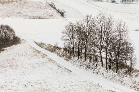 covered fields: Winter season and seasonal specific. Hilly fields maedows trees covered with white fresh snow. Countryside landscape