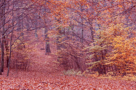 woodland scenery: Nature outdoor scenery woodland concept. Autumnal bushes in forest. Small vegetation amidst fall foliage golden leaves.