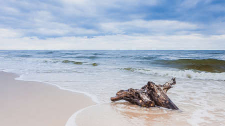 Baltic sea coast with trunk tree root in water on empty shore, clear yellow sand. Natural background. Stock Photo