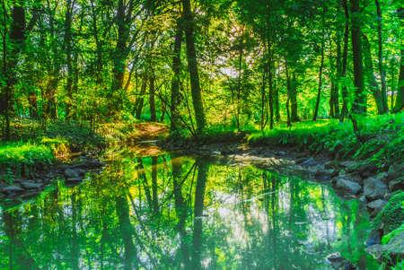 緑の森の森屋外。夏時公園の石の河川。自然の風景