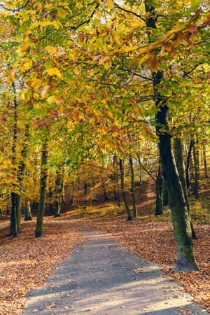 woodland scenery: Nature outdoor beauty scenery concept. Autumnal trees in sunshine. Woodland during fall season covered by dried foliage. Stock Photo