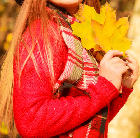 big leafs: Part body woman holding big gold leafs in autumnal park. Girl wearing red sweater and scarf posing outdoor.