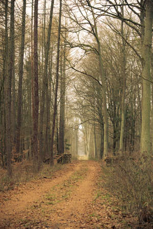 footway: Fall landscape. Country road and pile of wood in the autumn forest. Misty hazy autumnal day.