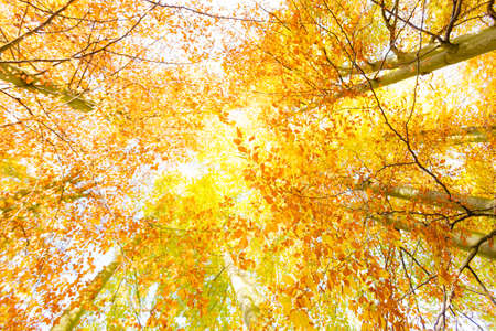 Autumnal scenery in forest