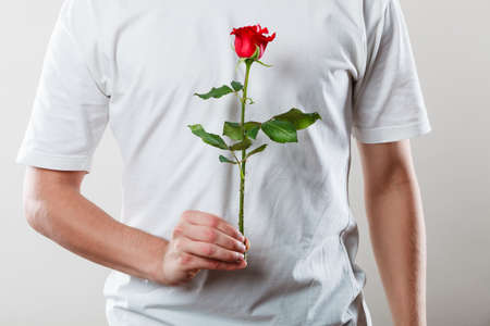 Anniversary proposal and engagement idea. Part body man with one red rose wearing white t-shirt. Love concept.