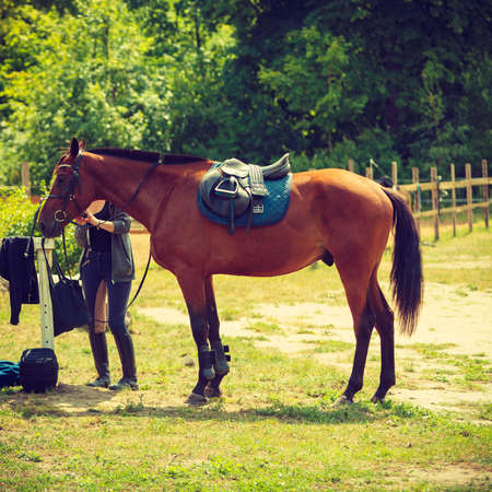 Beautiful brown arabian breed horse with saddle on countryside meadow. Animal concept.