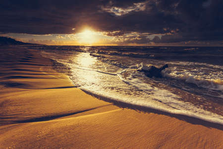 Baltic sea coast at golden romantic sunset time, with trunks and tree roots in water on empty shore, clear yellow sand. Natural background. Stock Photo