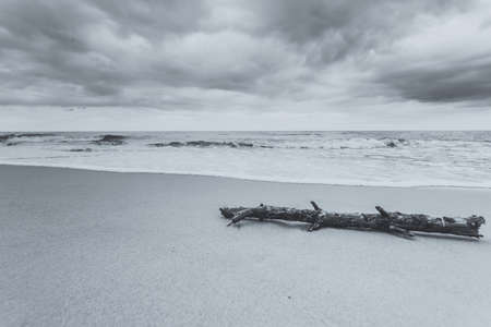 Baltic sea coast with trunk tree in water on empty shore, Natural background. Black & white image. Stock Photo