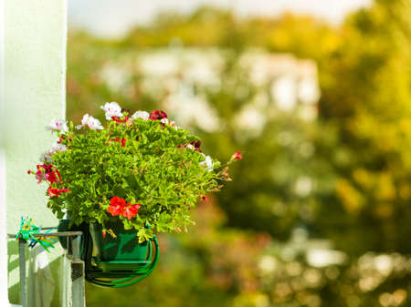 residential: Floristry, house decorations concept. Decorative balcony flowers in pots with hanger. Outdoor shot on sunny day.