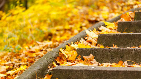 Stairs covered with leaves. Path in park covered with autumnal vegetation. Nature outdoor landscape scenery concept. Stock Photo