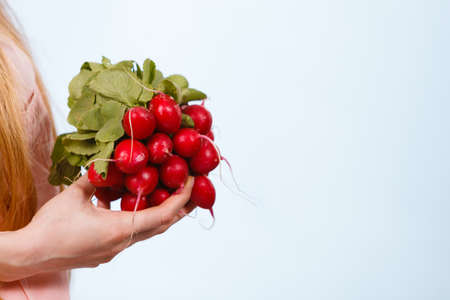Woman hand holding pink red delicious raddish vegetable on blue studio background.