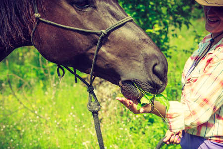 Animal and human love, equine concept. Western woman taking care of horse on green meadow Stock Photo