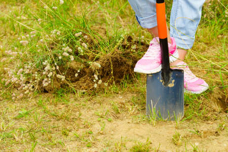 Woman gardener digs ground soil with shovel. Yard work around the house