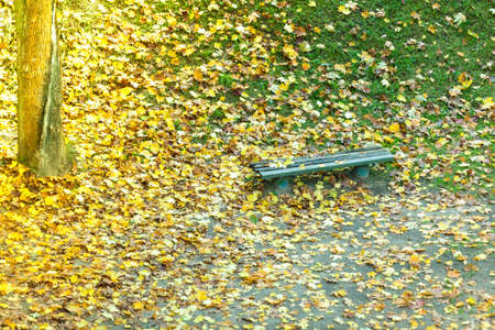 Autumn scenery. Bench and yellow brown maple leaves in city park, beautiful golden fall.
