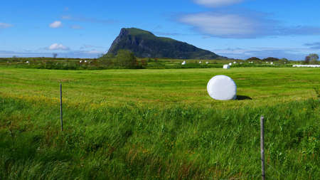 Agricultural landscape with straw packages on field. Cereal bale of hay wrapped in plastic white foil, summer in norwegian country, Lofoten