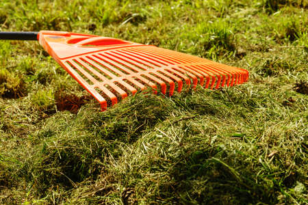 Orange rake on stick on green grass lawn, garden tools