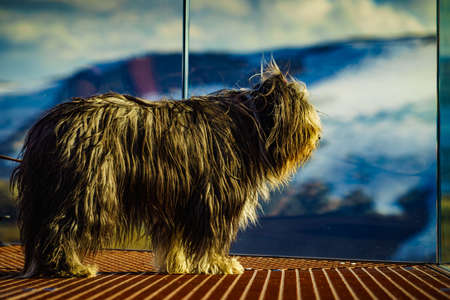 Travel with animals. Dog on Dalsnibba viewpoint in Norway