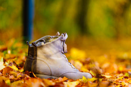 Grey shoes boots on orange gold leaves. Footwear from autumn fashion collection Stock Photo