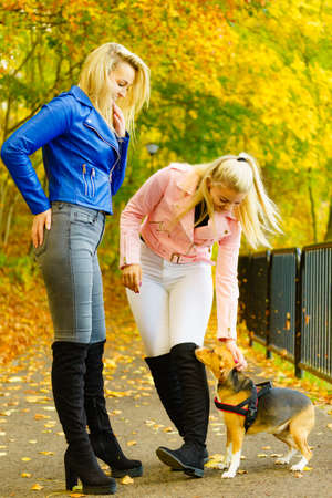 Two friends women wearing fashionable outfit during walk with dog. Female having navy bue pink leather jacket, jeans and high ankle black boots.