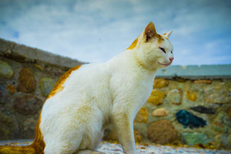 Beautiful undomesticated feral cat in white and red ginger orange colors. Close up of pretty animal kitty. Stock Photo