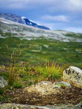 Mountain region between Aurland and Laerdal in Norway. Rocky landscape in summer. National tourist scenic route Aurlandsfjellet. Zdjęcie Seryjne