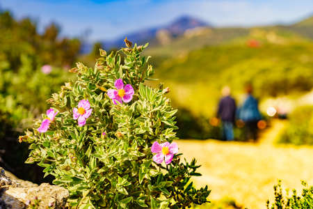 Flowers and blurred people walking. Nature reserve in the Sierra del Torcal mountain range near Antequera city, province Malaga, Andalusia, Spain.
