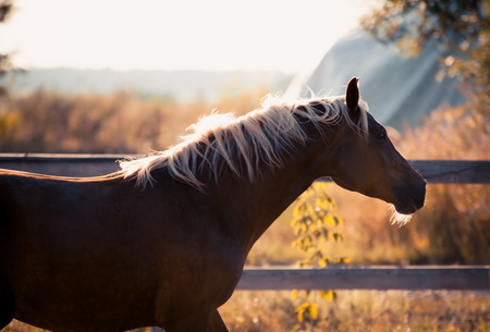 A beautiful horse enjoys freedom at sunset in autumn