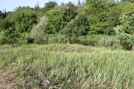 Bank of the river overgrown with green grass in the forest. For your design ideas