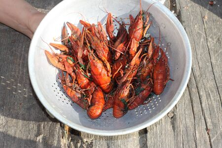 Boiled crayfish in a plate close-up. You can use it as a background, wallpaper or use in your design decisions.