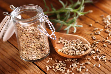 fennel seeds: fennel seeds in wooden spoon Stock Photo