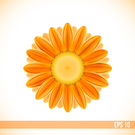 orange gerbera: vector orange color gerbera flower