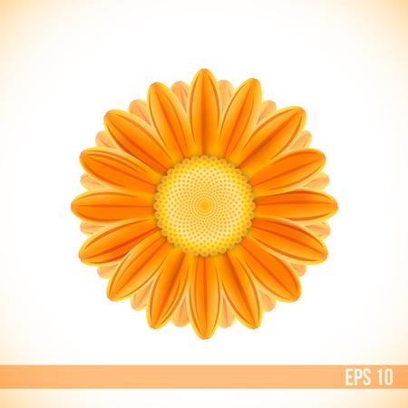 bovenaanzicht plant: vector oranje kleur gerbera bloem