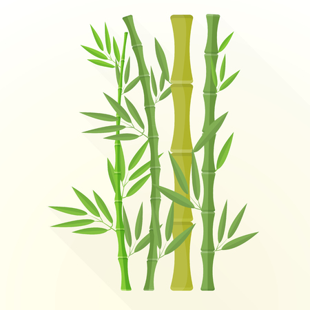 vector green color flat design bamboo plants with leafs illustration isolated light background long shadow Illustration