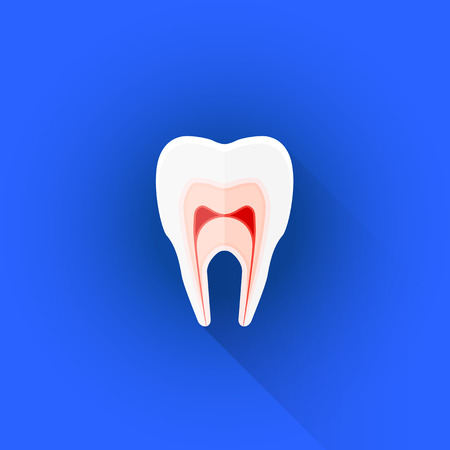 sectional: vector colored flat design sectional structure of human tooth illustration isolated blue background long shadow