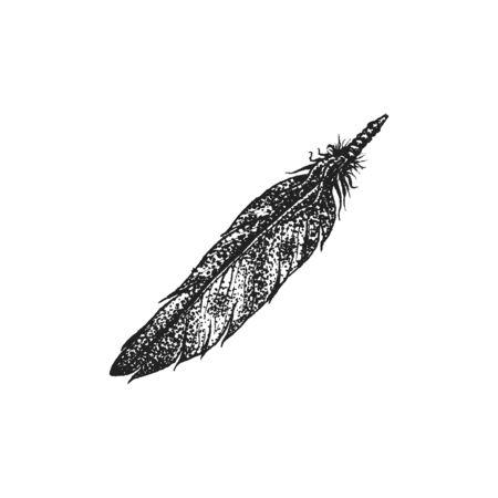 gravure: vector black color monochrome dotted art retro tattoo gravure style native american feather isolated decorative element realistic illustration white background