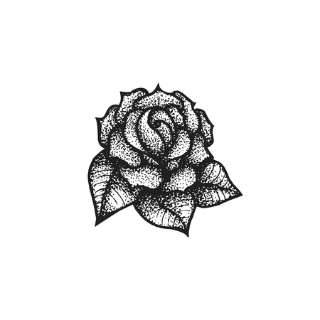 rose tattoo: vector black work tattoo dot art hand drawn engraving style vintage rose flower illustration isolated white background
