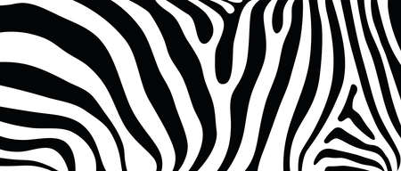 Seamless abstract vector background design based on African wildlife animal texture pattern of zebra striped print style