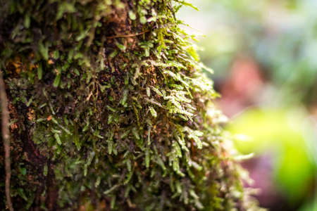 Mosses and lichens on tree bark Stock Photo