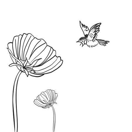 Sketch with a sparrow and flowers on an isolated background.