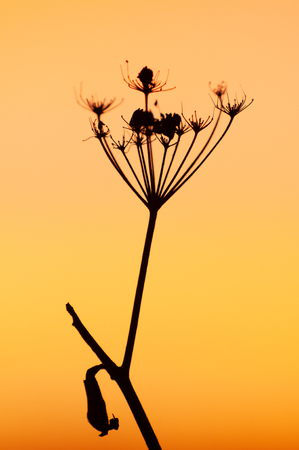Sunset with a backlit plant
